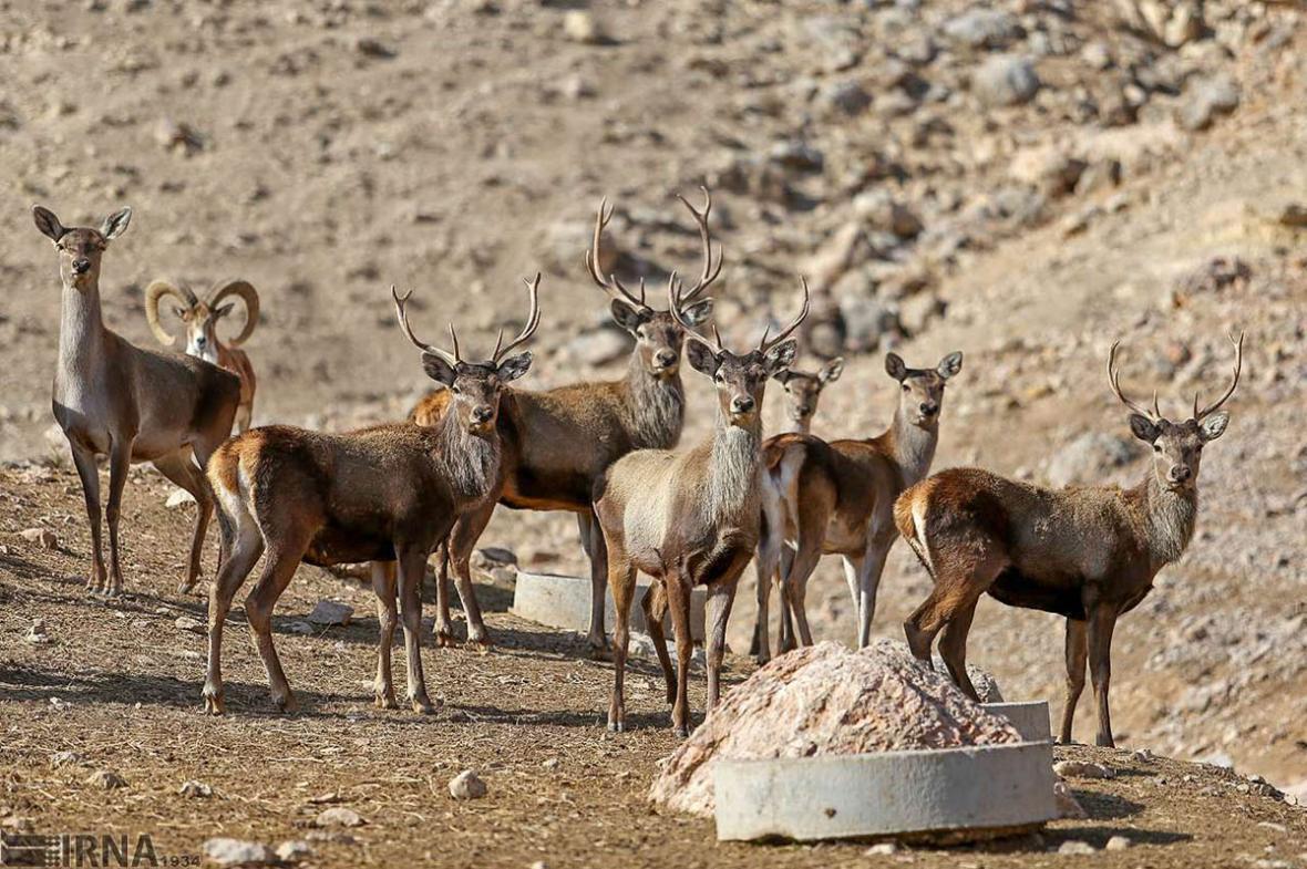 خراسان شمالی، قابی از تنوع زیستی ایران